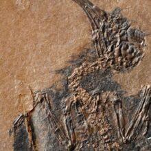 Птицы научились летать 50 млн лет назад.