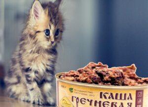 Дегустатор или «консервный» кот