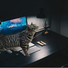 Телепортация и кот.