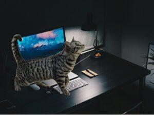 Телепортация и кот