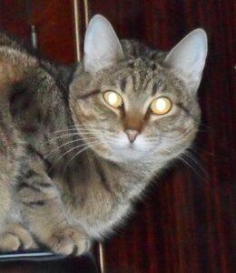 Удивительная интуиция и кот