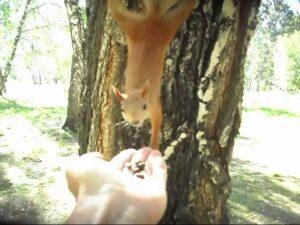 Любопытная и смешная белка в парке