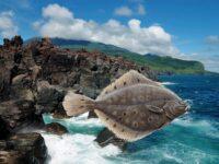 Ловля камбалы с берега на Курильских островах