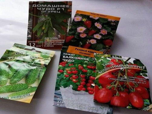 Выращиваем огурцы на подоконнике