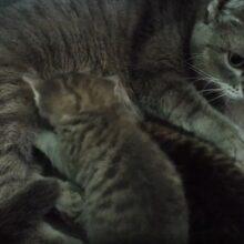 Моя кошка гипнотизер врачеватель и массажист