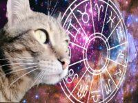Гороскоп. Кот и гороскоп на сутки