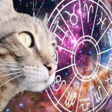 Гороскоп. Кот и гороскоп на сутки.