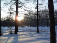 Загородная роща и менталитет отдыхающих