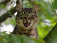 Как приручить злого кота