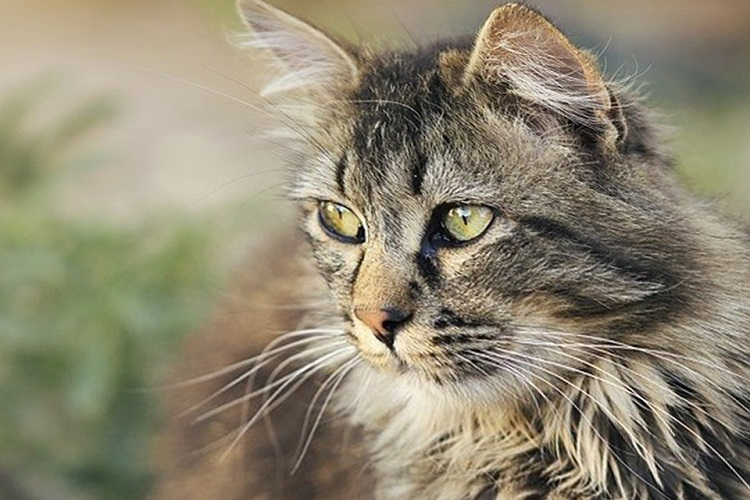 Могут ли кошки понимать свое собственное Имя?
