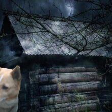 Мистическое свечение и гроза, напугало собаку, и она вскрыла дверь в сарай.