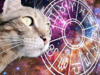 Predictor cat or cat horoscope for a day