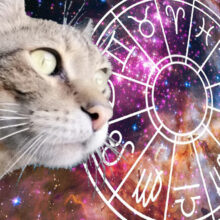 Predictor cat or cat horoscope for a day.