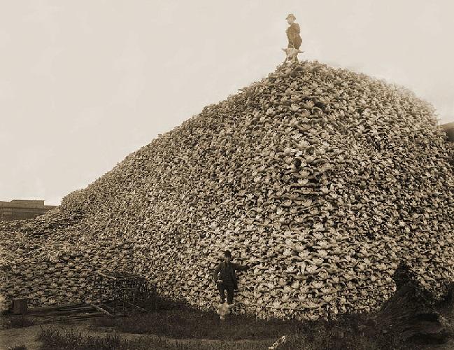 Черепа убитых бизонов, США, 1870