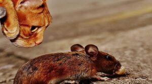 Борьба с грызунами. Методы борьбы