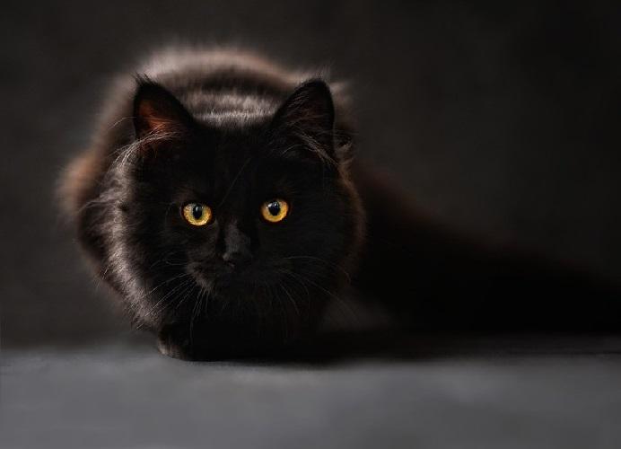 Кошки и летняя жара - помочь кошке
