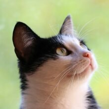 Язык жестов кошки