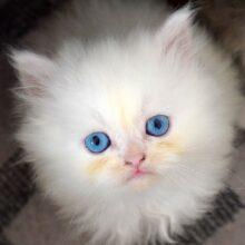 Кошки и летняя жара — помочь кошке