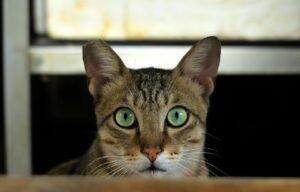 Воспитание кошек в домашних условиях