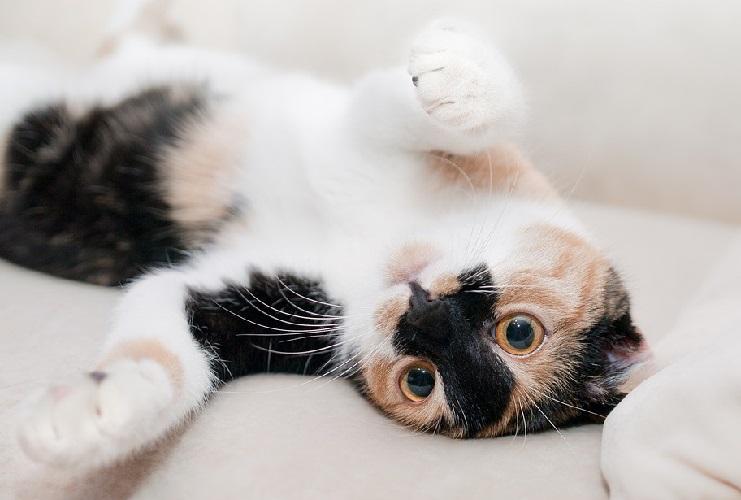 Как подружить кошек в вашем доме