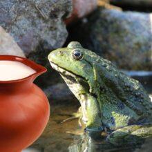 Лягушка в молоке — или как в древности сохраняли молоко
