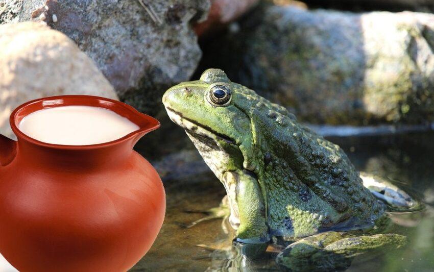 Лягушка в молоке - или как в древности сохраняли молоко