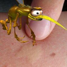 Почему чешутся укусы комаров