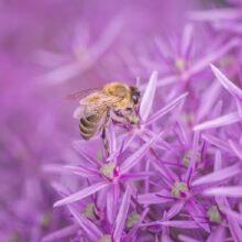 Пчеловоды и укусы пчел