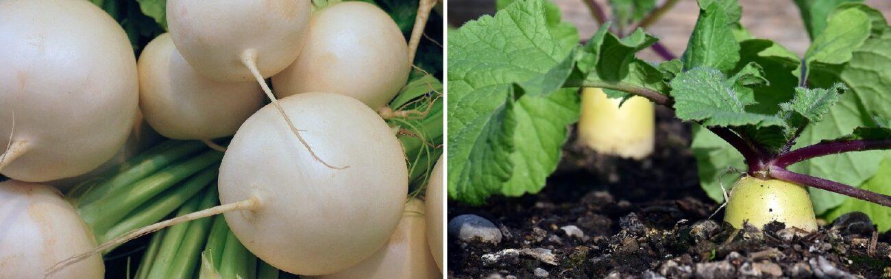 Природные антибиотики – овощи, фрукты, ягоды