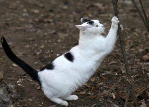 Кошка и когти