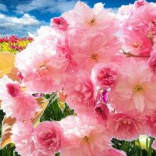 Как растения понимают — когда надо цвести
