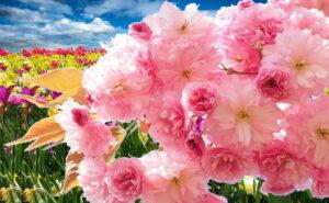 Как растения понимают - когда надо цвести