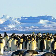Антарктида — ледники и их тайны