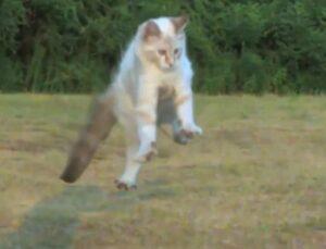 Кошки всегда прыгают на лапы