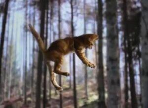 Как кошка приземляется на лапы