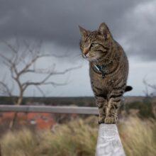 Что делать, если коты метят территорию дома