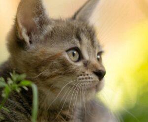 Почему кошки едят траву и как вырастить траву для кошки дома