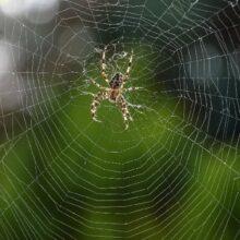 Паучок домашний или защита от комаров и мух
