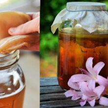 Чайный гриб и состав напитка чайного гриба