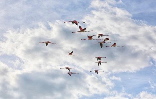 фламинго розовые