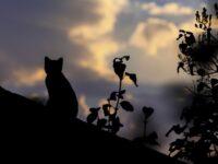 Целебное влияние кошки на человека