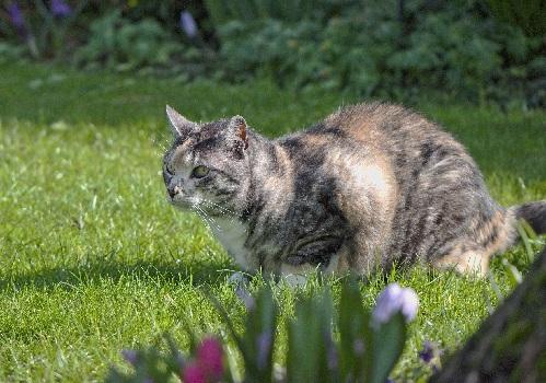 Кошка и ее империя