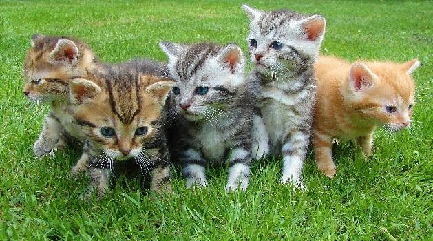 Кошка и история домашней кошки
