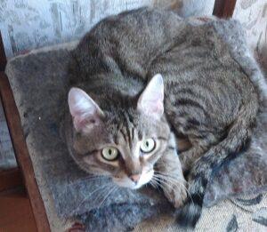 кот Тима