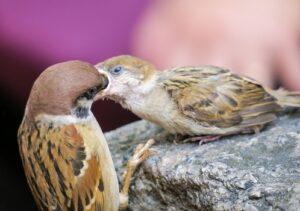 Уход за птенцами