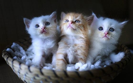 Кошка и домашние кошки