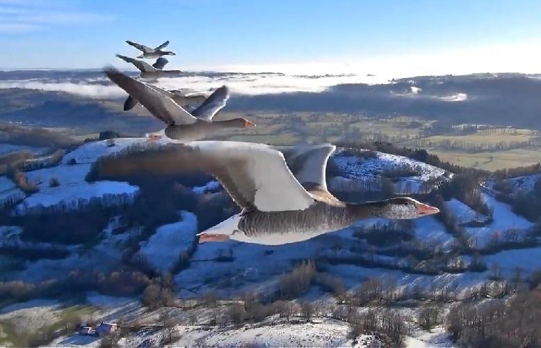перелеты птиц