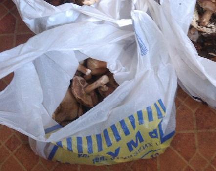 Какие грибы лучше выращивать на даче