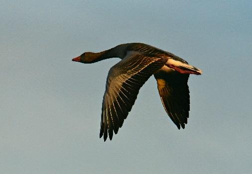 Птицы природные штурманы