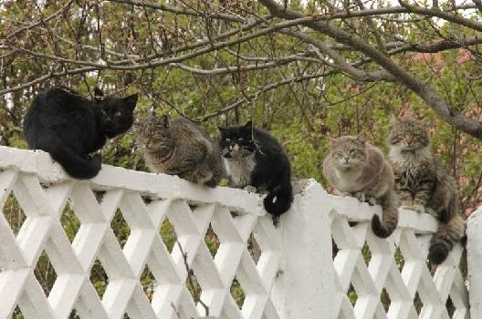 Кошка и шестое чувство